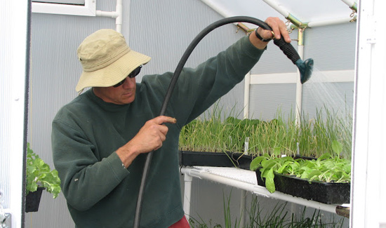 Man watering in greenhouse